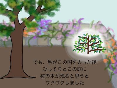 でも、私がこの国を去った後 ひっそりとこの庭に桜の木が残ると思うとワクワクしました