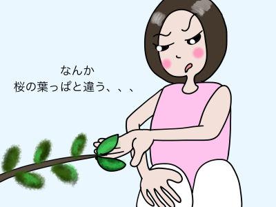 なんか、桜の葉っぱと違う、、、