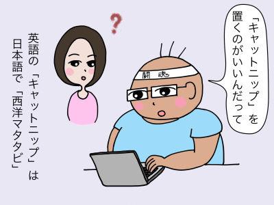 「『キャットニップ』を置くのがいいんだって」英語で「キャットニップ」は日本語で「西洋マタタビ」