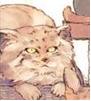 lirik_cat