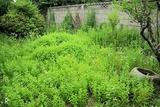 アップルミントの北庭2
