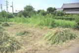 草刈り8月末2