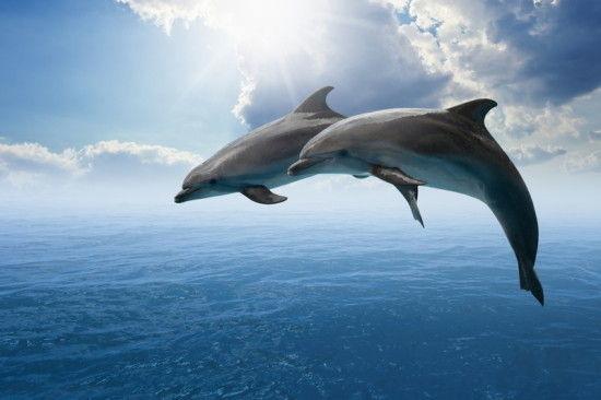 海豚ってイルカって読むんだなwww俺てっきりwwwwww