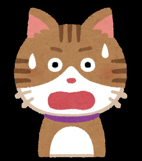 【画像】海外おじさん、先月に猫が消えるも1週間前に見つけ連れ帰った→その後をご覧くださいwwwwww