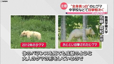 【北海道】「真っ白」のヒグマ目撃相次ぐ 危険性は普通のクマと同じ