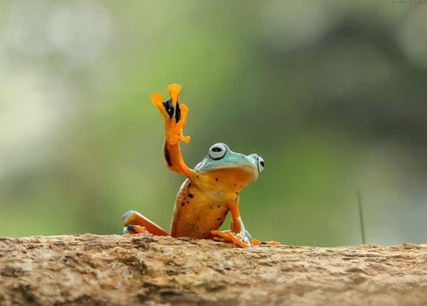 nature-photography-funny-frog-pictures-5-800x573[1]