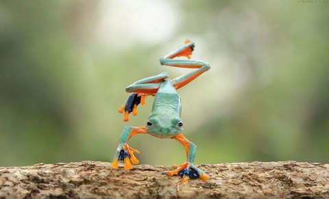 nature-photography-funny-frog-pictures-4-800x485[1]