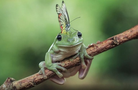 nature-photography-funny-frog-pictures-9-800x521[1]