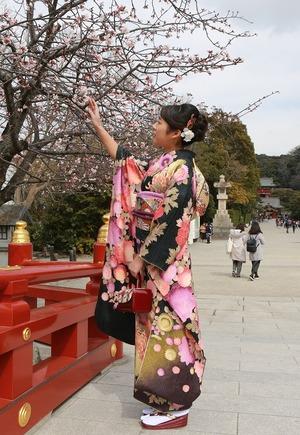 鎌倉振袖桜ロケーション写真八幡宮