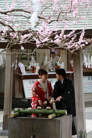 荏柄天神社梅結婚式写真