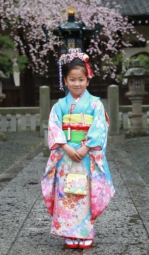 七五三、桜、ロケーション、鎌倉、3月、4月、着物、スタジオ