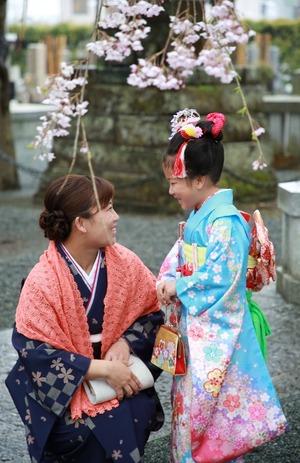 ロケーション、撮影、七五三、桜、家族写真、鎌倉、スタジオ