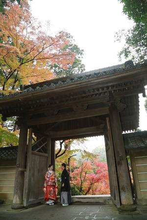 円覚寺紅葉婚礼写真3