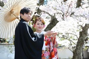 桜フォト 屋外撮影 鎌倉桜