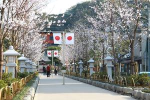 鶴岡八幡宮段蔓桜