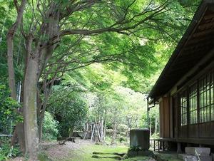 鎌倉英勝寺書院新緑