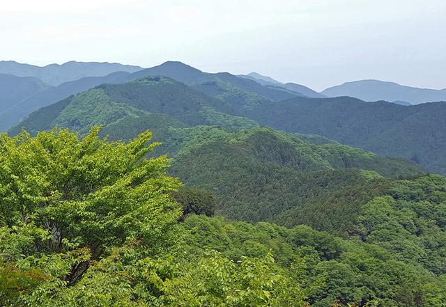 160521棒ノ折山01b