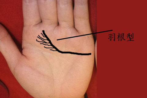 感情線羽根型