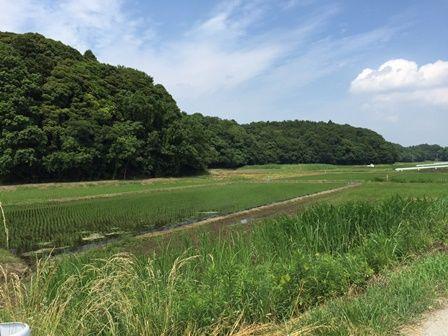 20150531 亀成川s