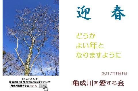 2017年 亀成年賀