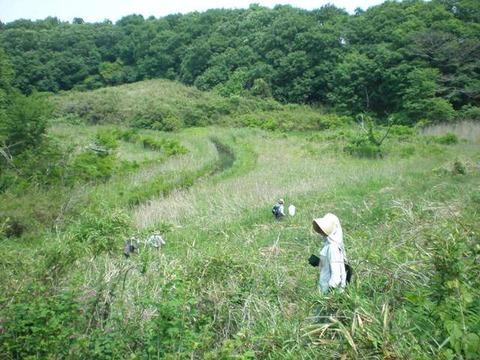 20110517別所緑地web
