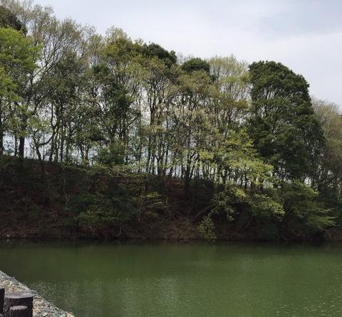 公園池のグラデーション