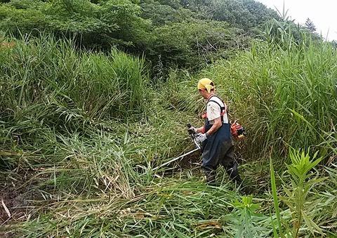 氾濫原の自然水路を刈り起こす西廣先生200724-001