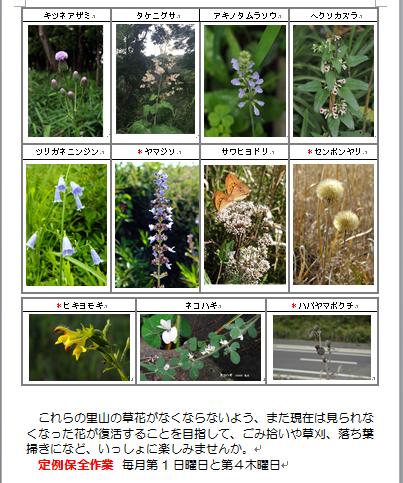 別所谷津公園で見られる花2の2