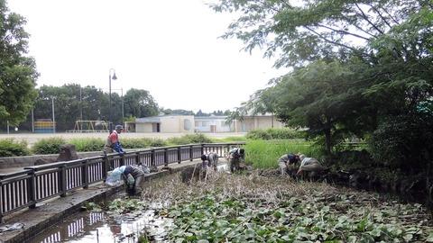 ビオトープ池作業180711-001印西滝野