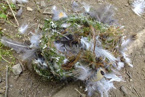 エナガの巣2