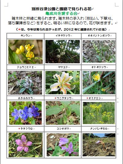 別所谷津公園で見られる花2の1