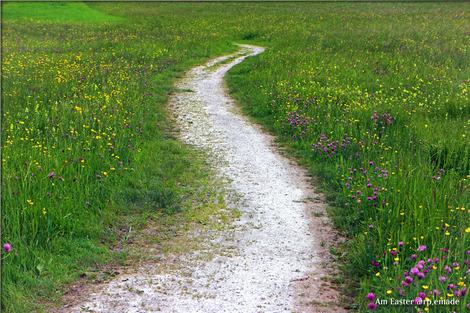trail-352284_1280