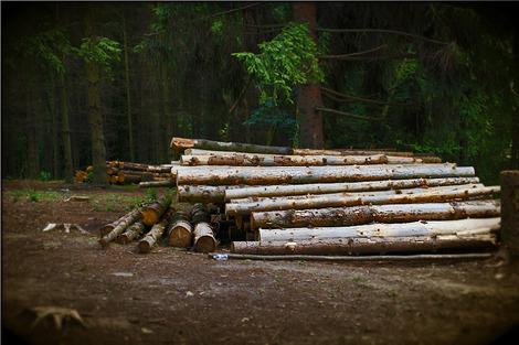 logs-957496_1280