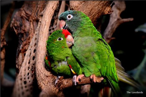 parrot-1271428_1280