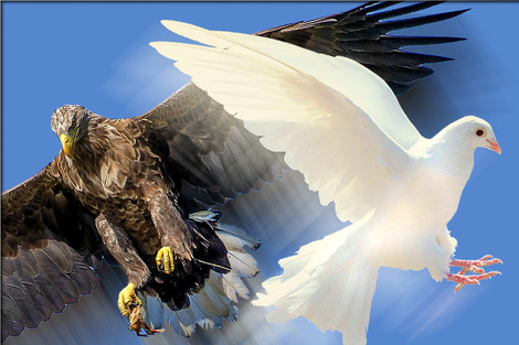 eagle&dove