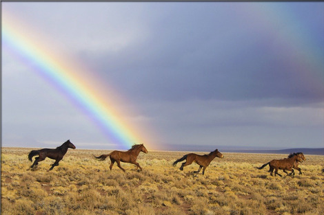 wild-horses-2239420_1280
