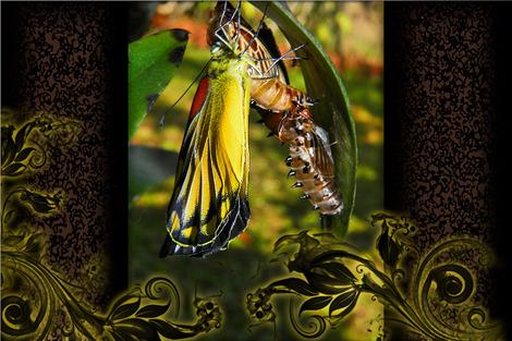 butterfly-461794_1280