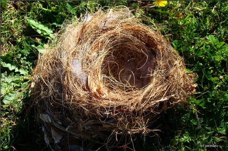 birds-nest-274582_1280