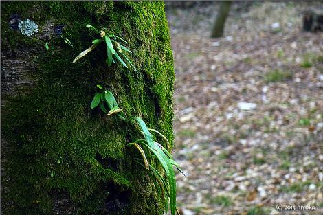 green_moss