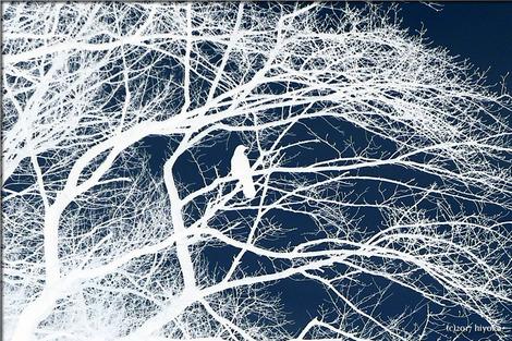 bird&tree