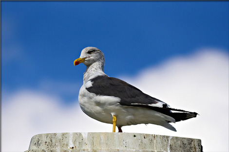 seagull-3680680_1280