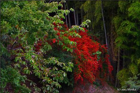 autum_woods