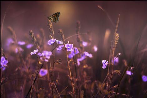 flowers-402094_1280