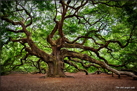 angel-oak-2018822_1280