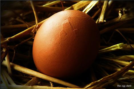 egg-19981_1280