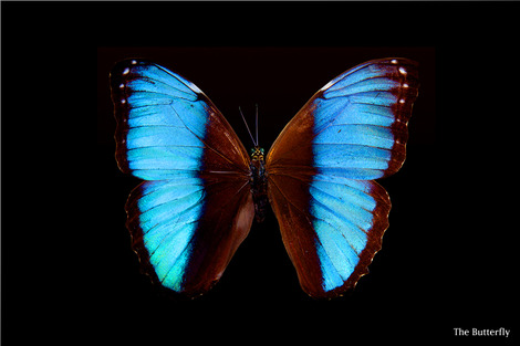 butterfly-176133_1280