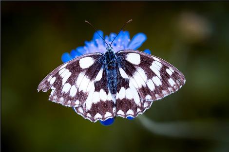 butterfly-1585728_1280