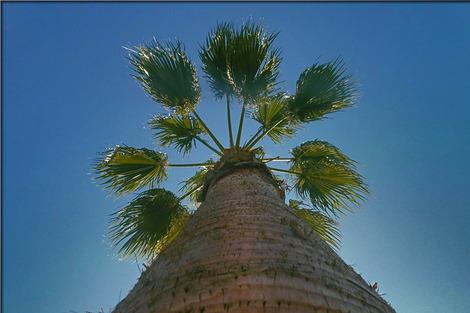 palm-532625_1280