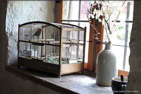 bird-cage-402205_1280