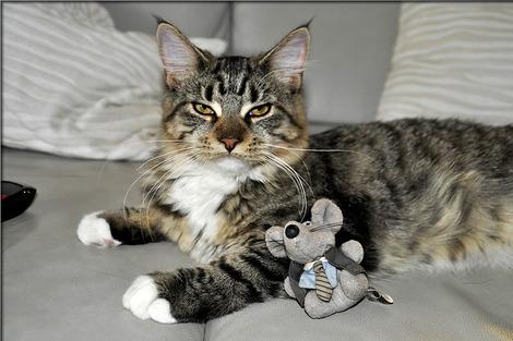 cat-199969_1280